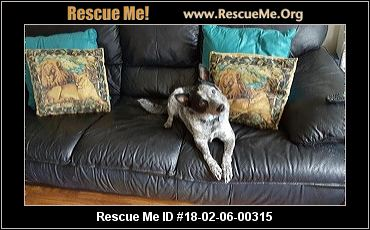 Herding Dog Rescue Florida