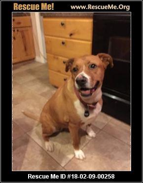 Idaho Dog Rescue ― Adoptions ― Rescueme Org