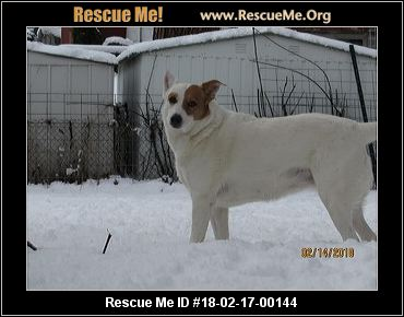 Dogs For Adoption In Kent Wa