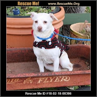 Texas Fox Terrier Rescue ― ADOPTIONS ― RescueMe.Org