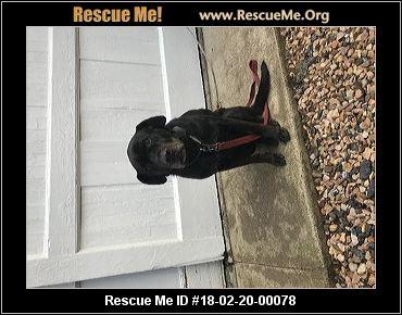 Virginia Lab Rescue ― Adoptions ― Rescueme Org