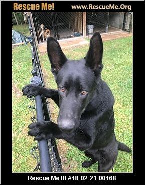 Indiana German Shepherd Rescue ― Adoptions ― Rescueme Org