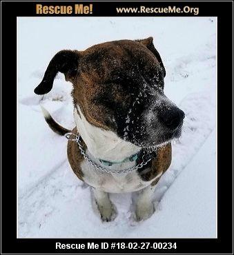 Small Dog Adoptions Richmond Va