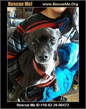Greyhound Dog Rescue Idaho