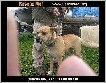 Rescue Dogs Butte County Ca