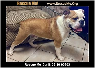 bulldog rescue az arizona bulldog rescue adoptions rescue me 1594