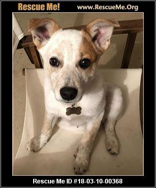 California Australian Cattle Dog Rescue ― Adoptions ― Rescueme Org