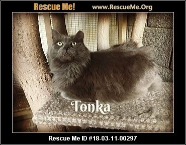 Persian Cat Rescue Phoenix Az