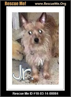 yorkie rescue kentucky kentucky dog rescue adoptions rescueme org 1941