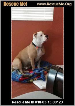 Small Rescue Dogs In Citrus County Florida