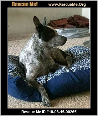 Purebred Dog Rescue Portland Or