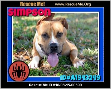 Broward County Animal Care Amp Adoption Fort Lauderdale