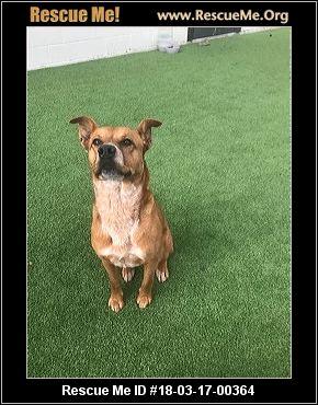 Aggressive Dog Rescue Virginia