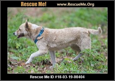 Florida Jack Russell Rescue ― Adoptions ― Rescueme Org