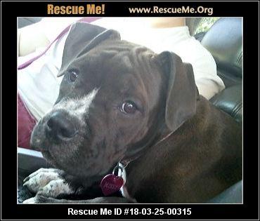Take Me Home Dog Rescue Idaho