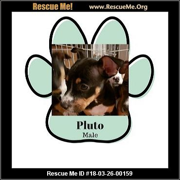 Missouri Dog Rescue ― Adoptions ― Rescueme Org