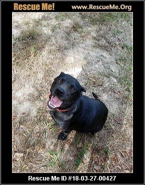 Forever Home Dog Rescue Johnston