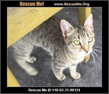 Cat Rescue Brevard County Florida