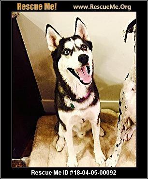 Dog Day Care Idaho Falls Id