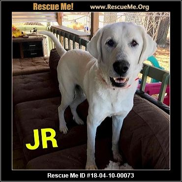 Colorado Great Pyrenees Rescue ― Adoptions ― Rescueme Org