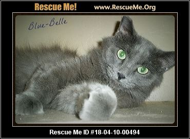 Declawed Cats For Adoption Phoenix Az