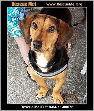 Dog Rescue Of Maryland Pasadena