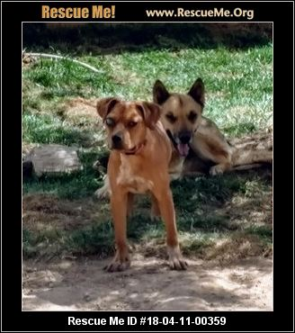 Soul Dog Rescue New Mexico