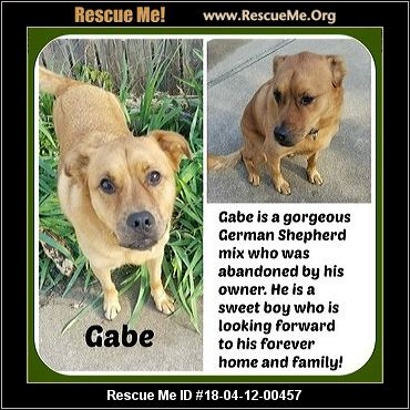 Gabe The Dog Rescue Age