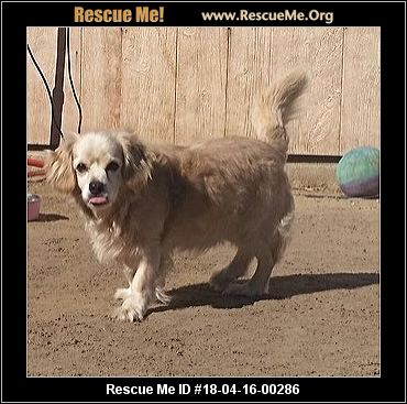 Dog Adoption St Mary S County Md