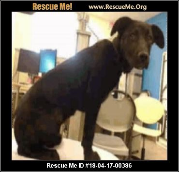Dancing Dogs Animal Rescue Denver
