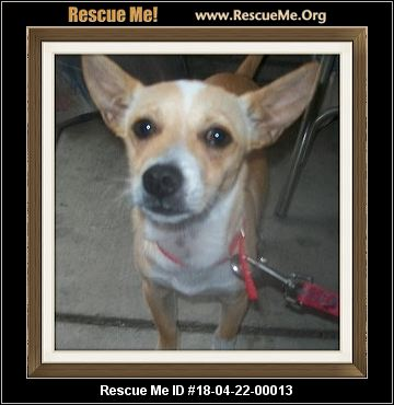 texas jack russell rescue adoptions rescueme org. Black Bedroom Furniture Sets. Home Design Ideas