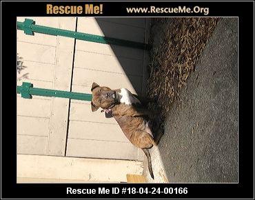 Seminole County Dog Rescue