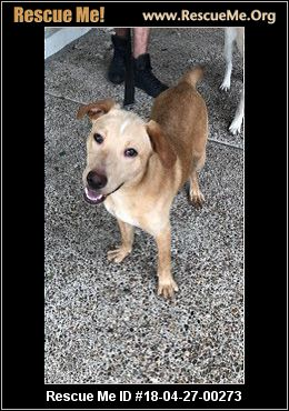 Rescue Me ID: 18-04-27-00273Grizzly (male)