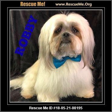 Arizona Shih Tzu Rescue ― Adoptions ― Rescueme Org