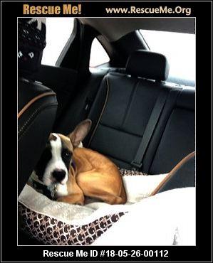Texas French Bulldog Rescue ― ADOPTIONS ― RescueMe Org