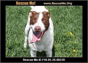 Idaho Australian Cattle Dog Rescue - ADOPTIONS - Rescue Me!