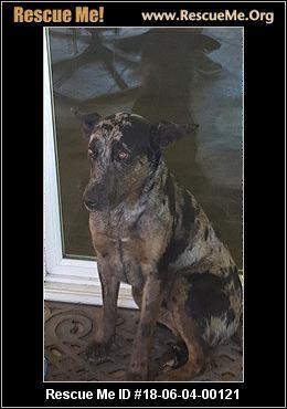 Dog Adoption Lewiston Idaho