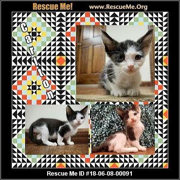 - Kansas Cat Rescue - ADOPTIONS - Rescue Me!