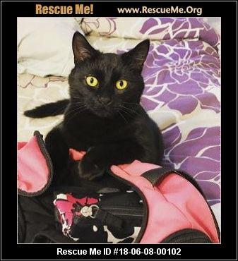 Maryland Cat Adoptions