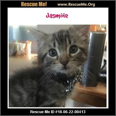 Cats For Adoption In Southern Maryland