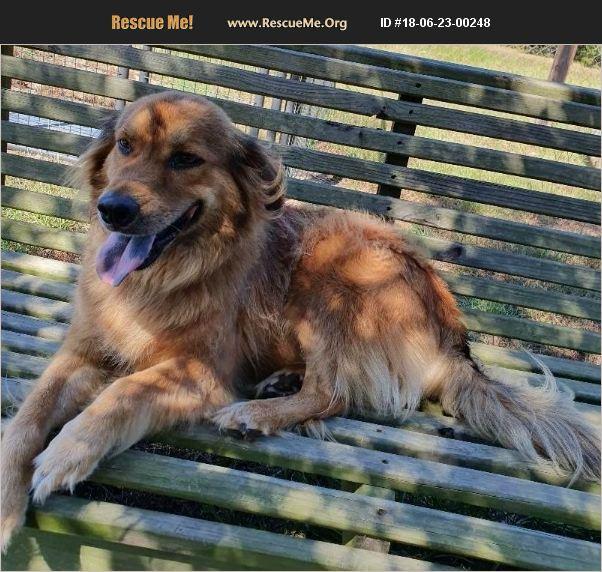 ADOPT 18062300248 ~ Australian Shepherd Rescue ~ Barnwell, SC