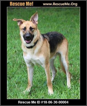 Therapy Dog Training Fort Wayne