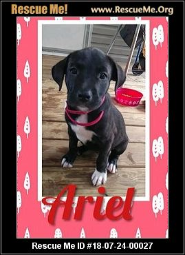 New Jersey Lab Rescue - ADOPTIONS - Rescue Me!