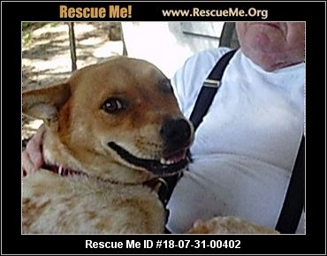 Dog Rescue Clearwater Florida
