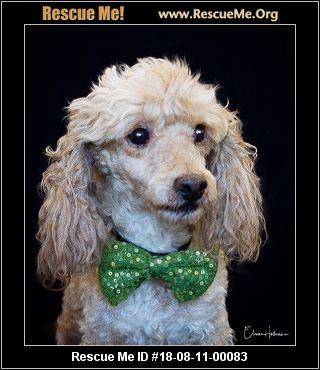 California Poodle Rescue - ADOPTIONS - Rescue Me!