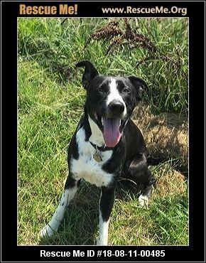 Louisiana Border Collie Rescue - ADOPTIONS - Rescue Me!