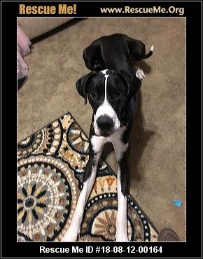 Arkansas Great Dane Rescue - ADOPTIONS - Rescue Me!