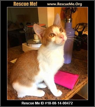 Cecilia S Cat Rescue West Palm Beach Fl Available Pets