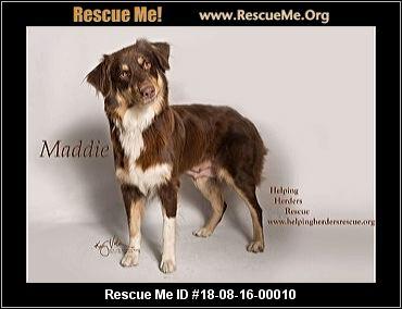 California Australian Shepherd Rescue - ADOPTIONS - Rescue Me!