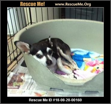 Missouri Dog Rescue - ADOPTIONS - Rescue Me!